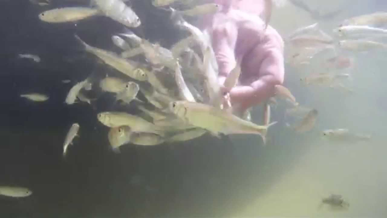 Fische im teich youtube for Fische in teichen
