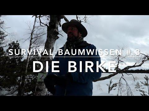 Survival Baumwissen # 3 - Birke