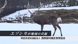 エゾシカが地域の資源 「特定非営利活動法人 西興部村猟区管理協会」(北海道西興部村)