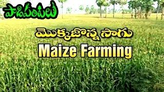Success Story of Maize Farming in East Godavari | Paadi Pantalu | Express TV