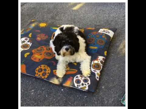 Indie demos next season's Dog Cushions – www.indieboho.com.au