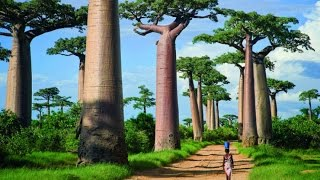 10 Most Famous Trees in the World