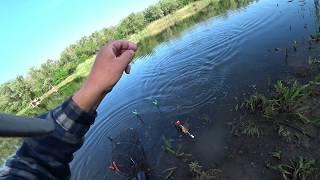 Рыбалка на поплавочную удочку Карась как всегда радует своим клёвом