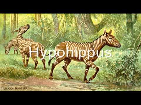 The Miocene Epoch