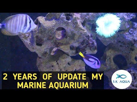 2 Year Update Of  My 3 Feet Marine Aquarium |Tamil|