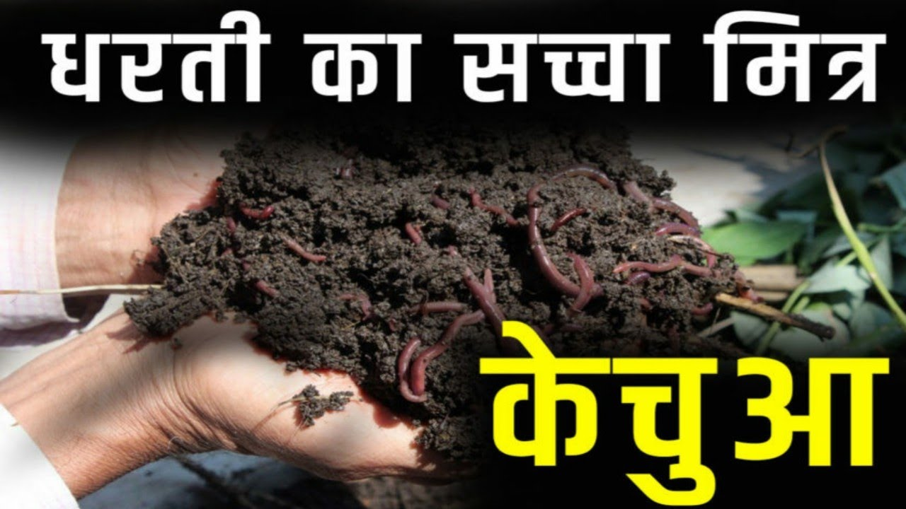 केंचुआ खाद के कई फायदें । earthworm manure preparation । kisan farming