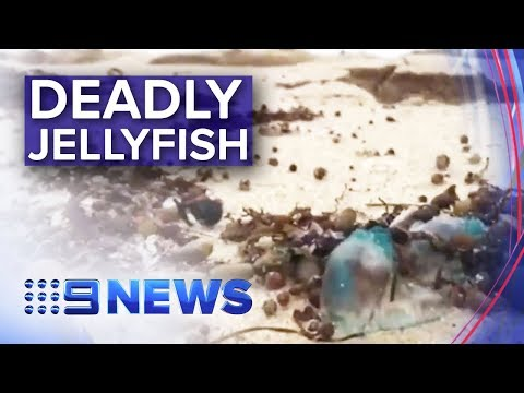 Popular Victorian Beaches Swarmed With Deadly Jellyfish | Nine News Australia