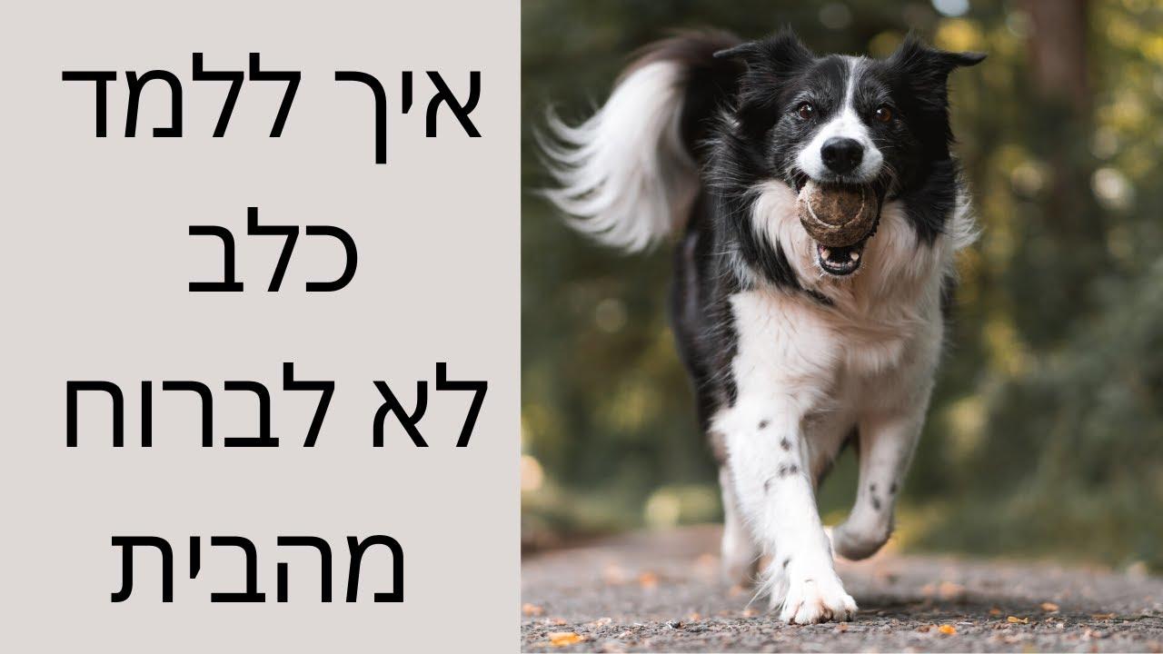 איך ללמד כלב לא לברוח מהבית ? - טל שלוש מאלף כלבים מומחה