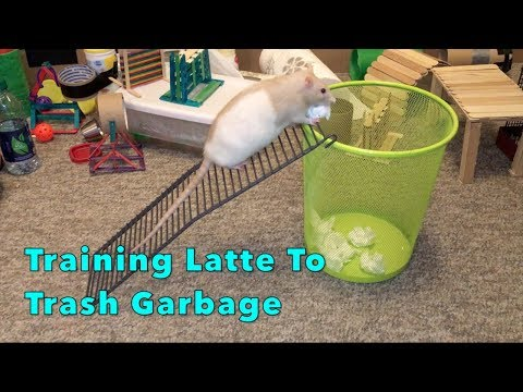 Training Latte to Trash Garbage in a LARGE Container!