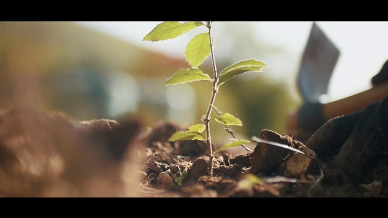 Truffleland tartufi | Un investimento all'altezza dei sogni