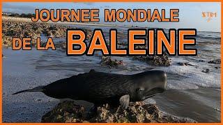 19 Février, c'est la journée mondiale de la BALEINE !