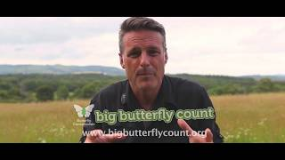 How to take part in the Big Butterfly Count