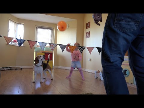 My dog and baby play better Volleyball than me! | Charlie the beagle and Laura