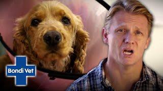 Dog With Massive Wound Like a Shark Bite!!!   Full Episode   Bondi Vet