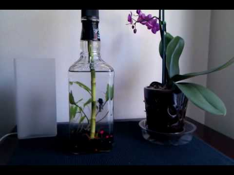 The coolest betta tank ever youtube for Cool betta fish tanks