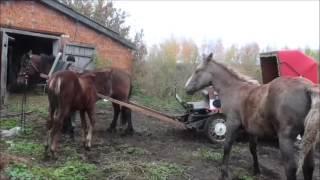кони фильм