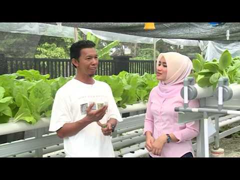 Pekanbaru Bertani Asyik Hidroponik
