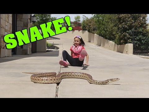 Thumbnail: LITTLE GIRL PLAYS WITH WILD SNAKE!!!