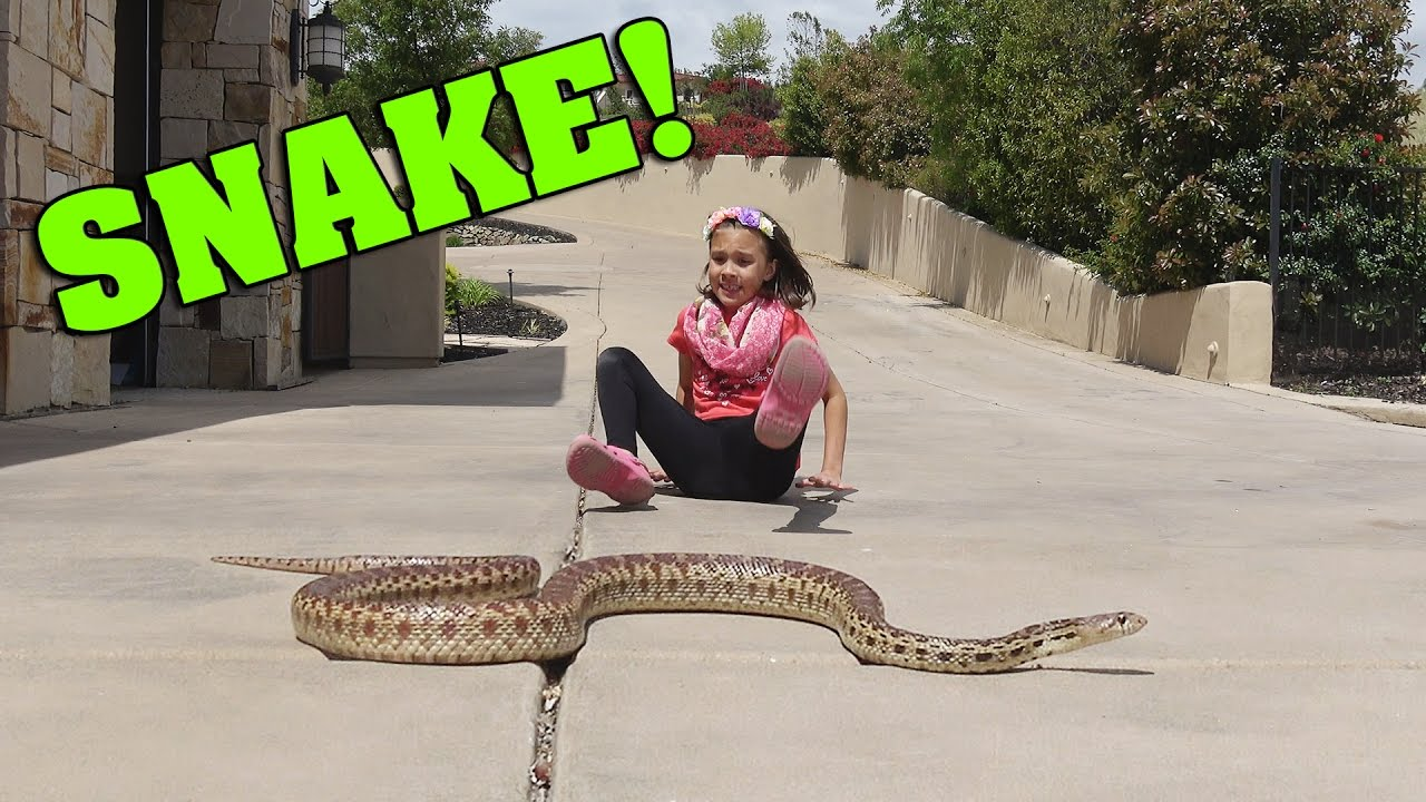 Little Girl Plays With Wild Snake Youtube