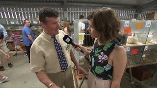 Prif Stiward y Plu | Poultry Main Steward