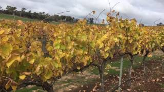 Glenwillow Shiraz