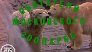 Утренняя почта № 10. 'Зоопарк' | Утренняя почта (1983)