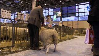 SIA 2012 : On bichonne le Texel