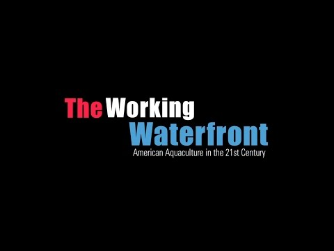 The Working Waterfront - American Aquaculture in the 21st Ce