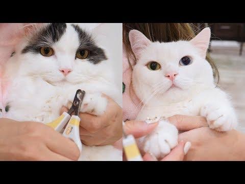 (초귀욤주의) 고양이 발톱깎기 ✂️ 집사 난이도 최상의 일
