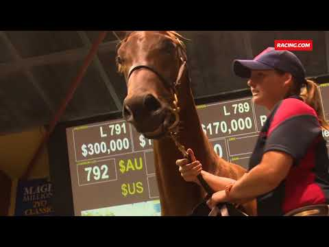 2018 Magic Millions Gold Coast Yearling Sale - Book 1 wrap - Post Day 4