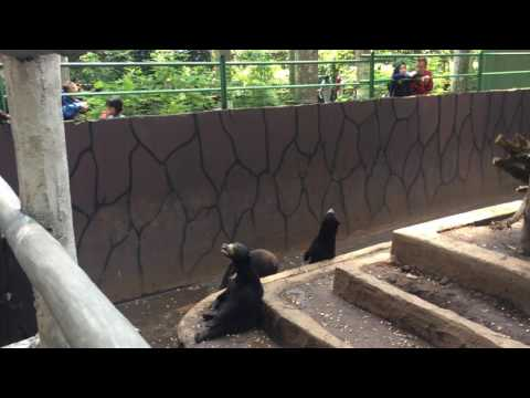Update on bears in Bandung Zoo, 16 April 2017.