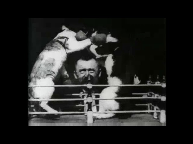 Thomas Edison Invented Cat Videos