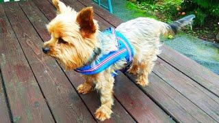 Светоотражающая шлейка для собак / Reflective harness for dogs