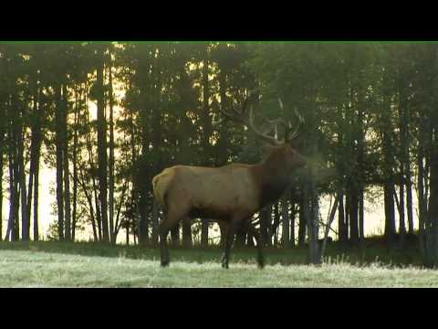 Ontario's Historic Elk Hunt