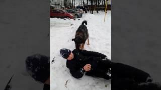 ПОЛОВОЙ АКТ С СОБАКОЙ, Пацана трахнула собака