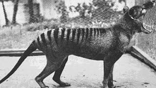 25 Extinct Animals That Scientists Want To De-Extinct