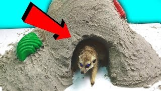 A SAND HOUSE FOR MY MEERKAT PET ... WHAT WILL HE DO?!
