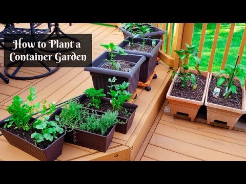 how to plant a container garden small gardening on your backyard deck or patio