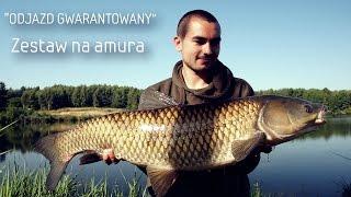 Zestaw na amura/Poradnik/Odjazd Gwarantowany/Karp Max thumbnail