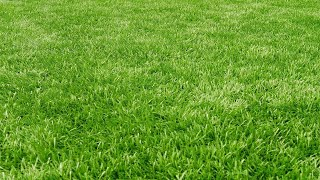 A Lesson In Taking Care Of Your Lawn From an MLB Groundskeeper