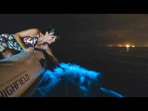 Most INTENSE Bioluminescence & a 42 Hour Bus Trip || Sailing Ecuador
