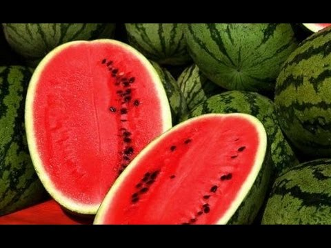 How To Grow WATERMELON From Seed Growing Melons Gardening