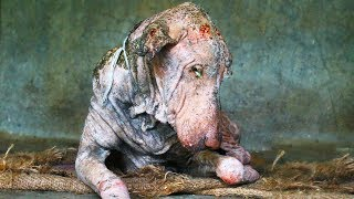 this-dog-was-sick-and-covered-in-mange-but-the-photos-of-his-transformation-are-heartwarming