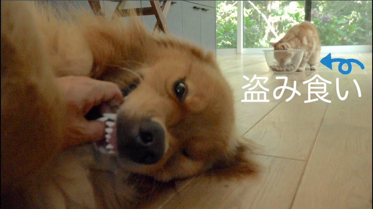くうたの犬用ごはんを盗み食いする小侍郎