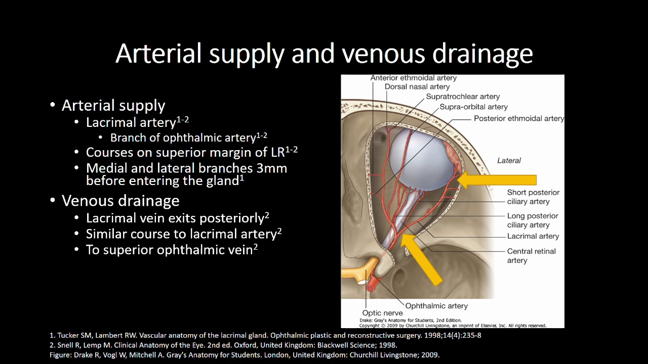Anatomy of the Lacrimal Gland - YouTube