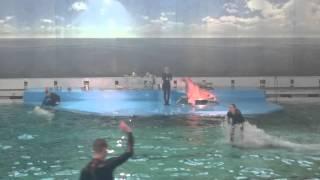 Дельфинарий Санкт-Петербурга(Дельфинарий Санкт-Петербурга., 2015-11-03T13:42:35.000Z)
