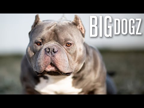 Meet China Boy - The '$1 Million Bully' | BIG DOGZ