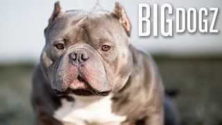 Meet China Boy  The '$1 Million Bully' | BIG DOGZ