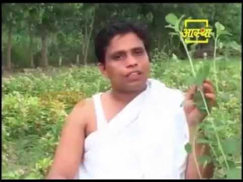 Ayurvedic Use Bauchi