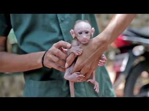 Thane SPCA Documentary
